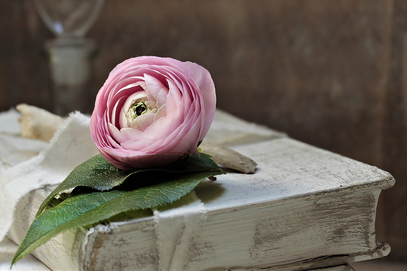 Pink flower on a book
