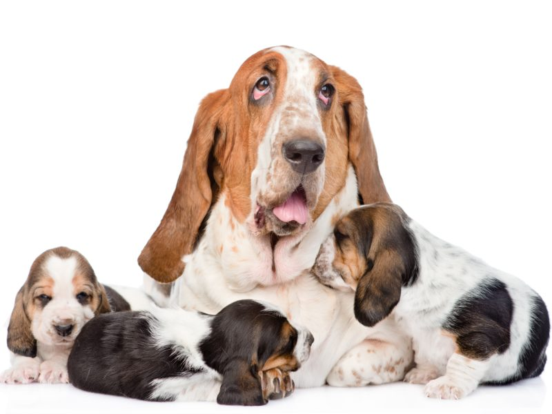 mother hound with puppies needs life insurance