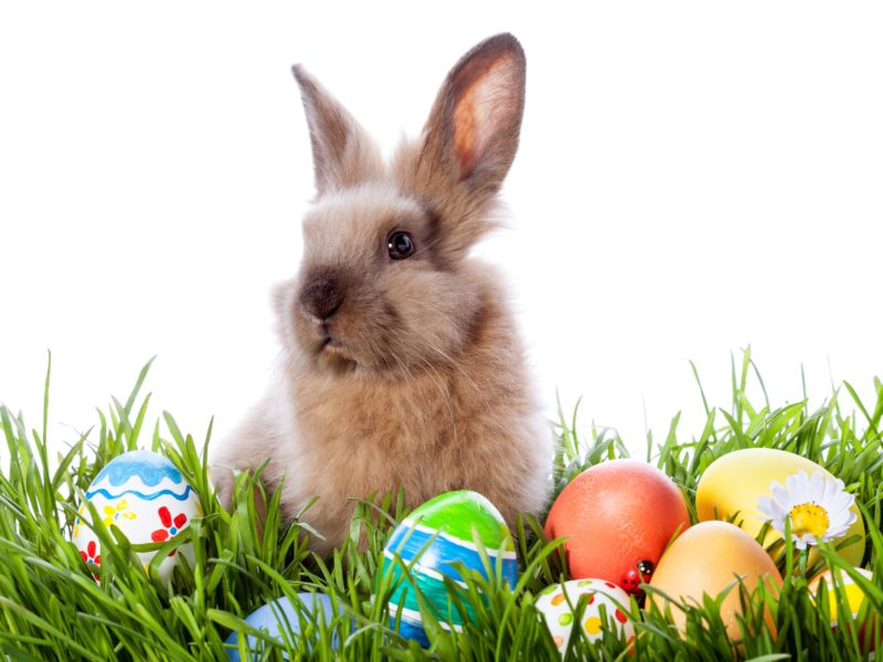 Easter bunny with colorful eggs in green grass